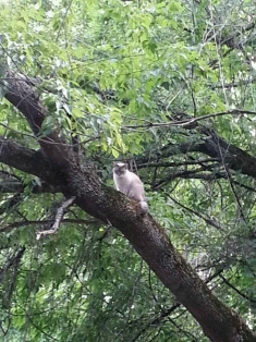 Kitty in a tree