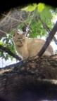aviary_1468936461545.jpg